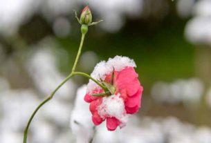 W jaki sprzęty ogrodowe warto zainwestować zimą?